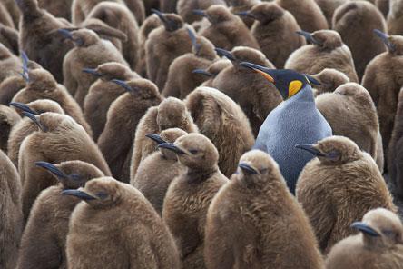 Opvallende pinguin als symbool voor teamcoaching